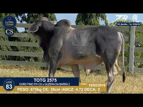 LOTE 83