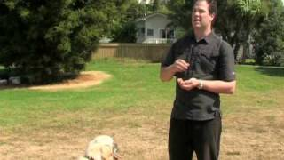 Dog Guru Dog Training