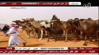 البث المباشر  قناة الصحراء الابل