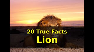 Lion facts | 20 True Fun Facts about Lions for Kids with Audio | Animal fact series | NoNaTV
