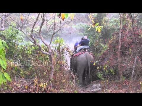 Elephant safari at Manas National Park, Assam