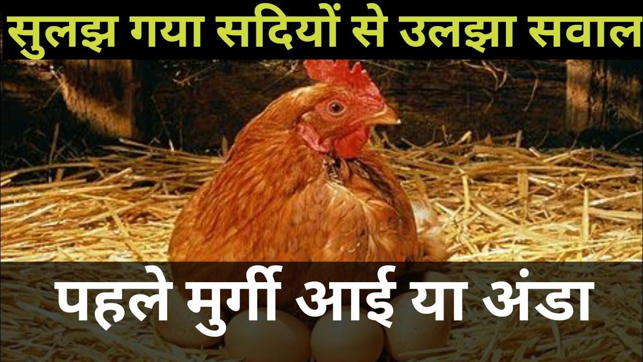 सुलझ गया सदियों से उलझा सवाल- पहले मुर्गी आई या अंडा, आप भी हो जाएंगे हैरान..|