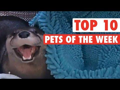 Top Pets of the Week: Epic Pets || Nov 13 2015