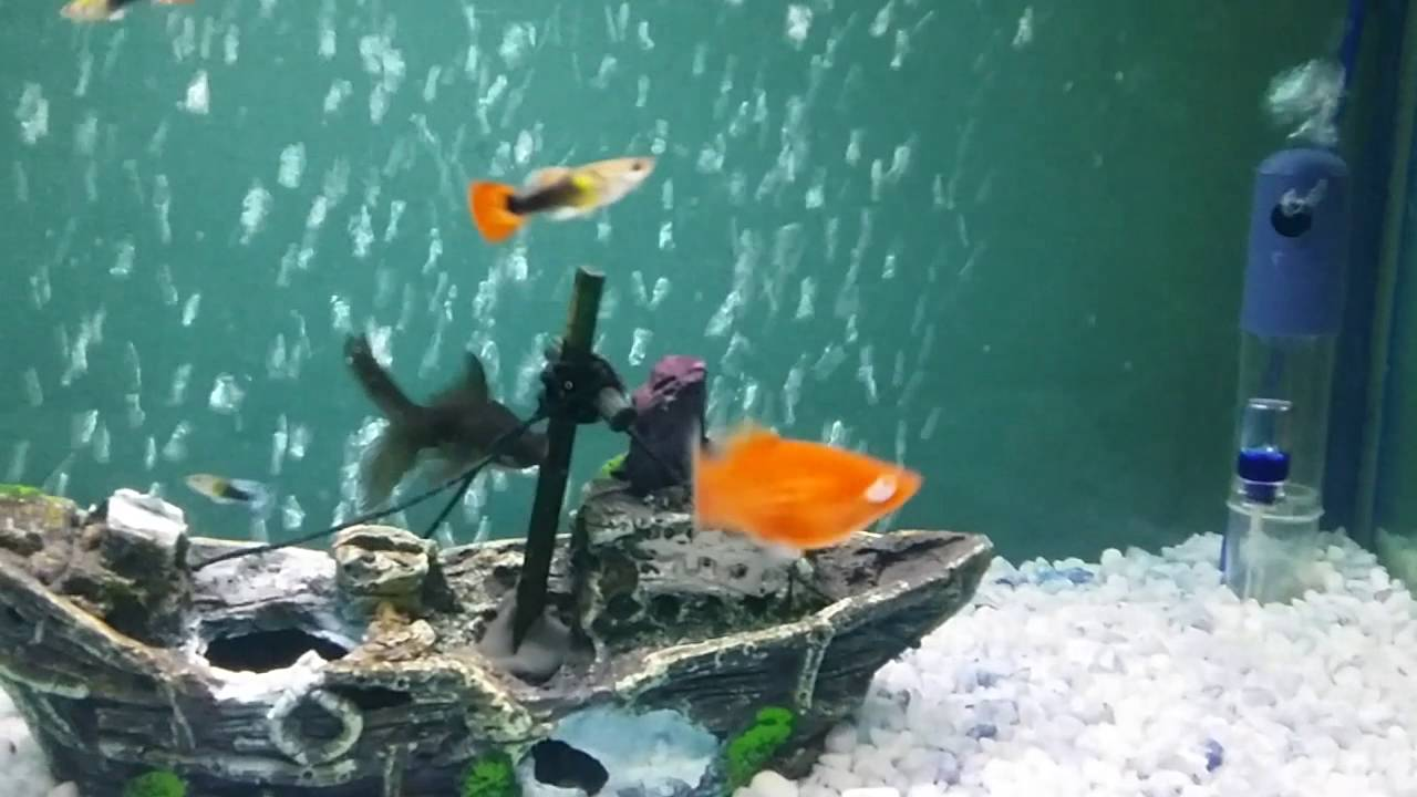 My Aquarium Bangladesh Youtube