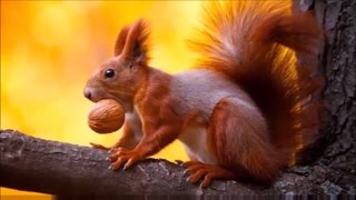 Funny Facts About Animals You Didn't Know : Things at Zoo (biology) | DISCOVER