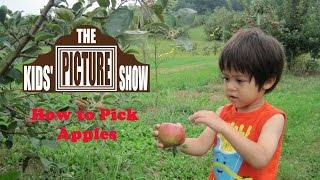 How to Pick Apples - The Kids' Picture Show (Fun & Educational Learning Video)