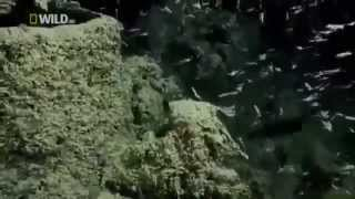 Full Documentary Creatures of the Deep Ocean Wildlife National Geographic