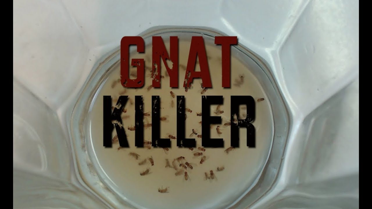 gnat killer