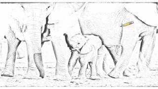 Auto Draw 2: African Elephant Calf With Herd, Etosha National Park, Namibia