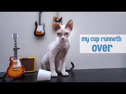Kitten knocks over cup of water (Original Music + Funny Devon Rex Kitten)