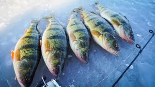 EPIC Sight Fishing For Perch | Underwater FOOTAGE