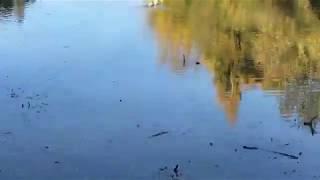 парк Затюменский