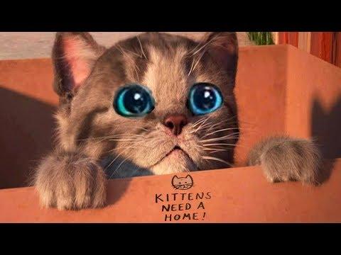 Little Kitten My Favorite Cat - Play Fun Pet Care Kids Game - Fun Games For Kids & Children