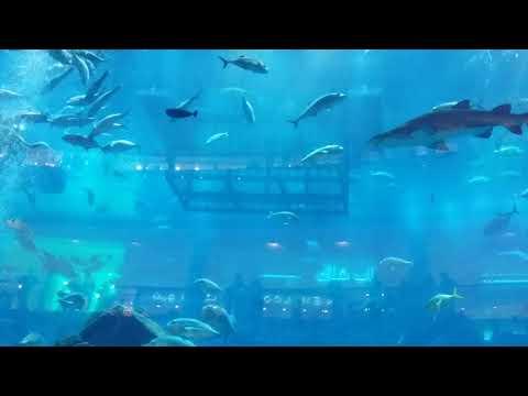 Sharks Dubai Aquarium Underwater Zoo   Dubai Mall