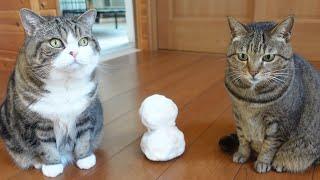 雪だるまとねこ。-Snowman and Cats.-