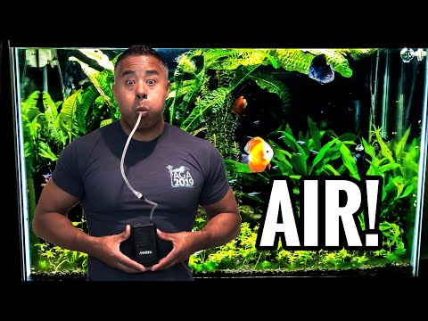 Your Fish Tank Needs Air!
