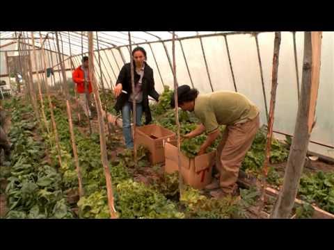 Documental Mercado Popular Charcao Cooperativa Limitada