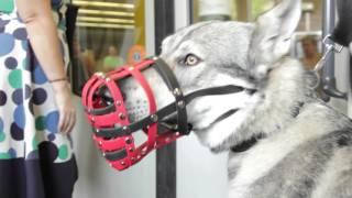 Mit dem Wolfhund durch Wien #2