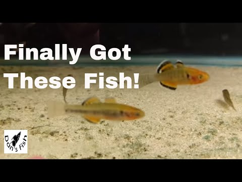 Unboxing Tropical Fish - Empire Gudgeons, Uaru, Clouded Archers, And More!