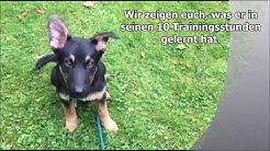Hundeschule Rahlstedt - Welpentraining