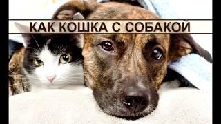 Как кошка с собакой: забавное видео о животных. Cat with dog