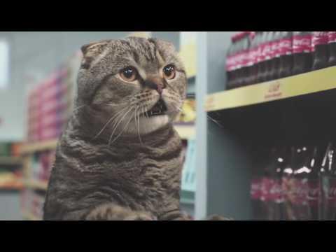 Meilleur clip pub de Netto avec des chats