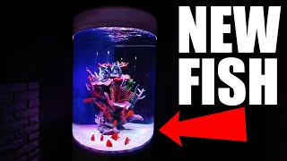 NEW SALTWATER FISH! The king of DIY