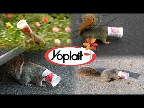 Yoplait Yogurt NEEDS to change...  - Save the Squirrels Initiative