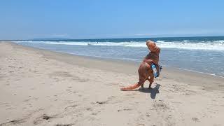 Alex Bio Video for Kapowui Surf Lessons Venice Beach / Santa Monica Ca.310-985-4577