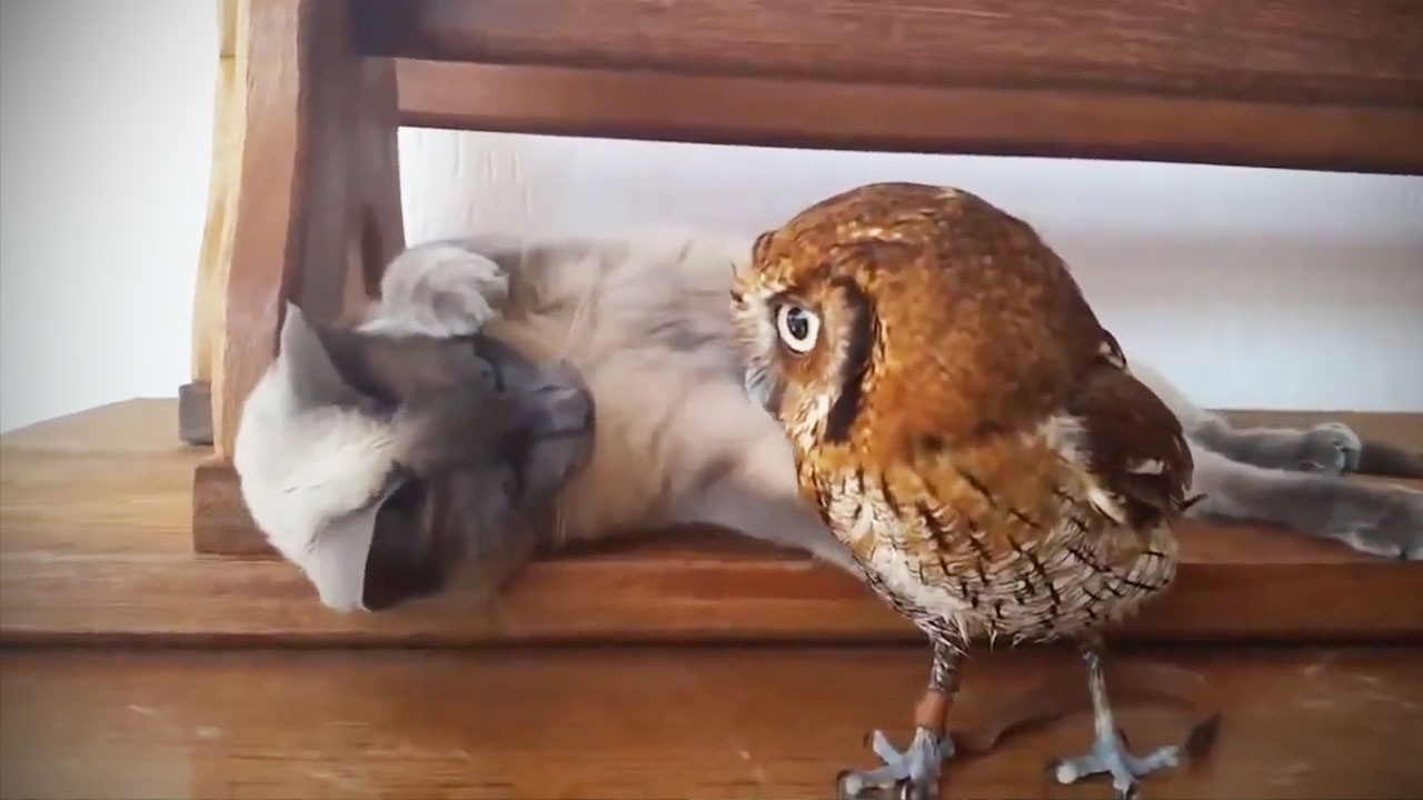 Humorous & Cute Owls 🦉[Funny Pets]