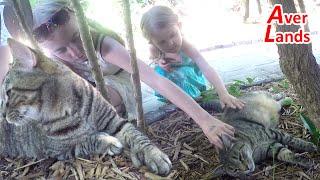 Шестипалые кошки Хемингуэя. Дом и музей Эрнест Хемингуэй Ки-Уэст Флорида США отдых