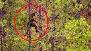 5 Lần Dã Nhân Xuất Hiện Vô Tình Được Camera Quay Lại Ngoài Đời Thật || 5 Bigfoot Caught On Camera