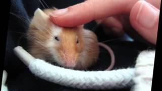 Hommage à la meilleure souris du monde. ♥
