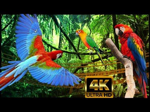 ПОПУГАИ АРА-САМЫЕ КРАСИВЫЕ В МИРЕ! Джунгли, Lounge Мusic! Красивые Съёмки Тропического Леса 4К