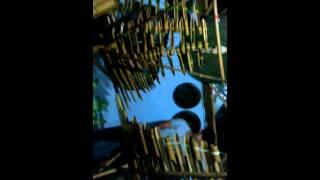 đỉnh cao âm nhạc(nhạc cụ  dân tộc)... âm hưởng tây nguyên