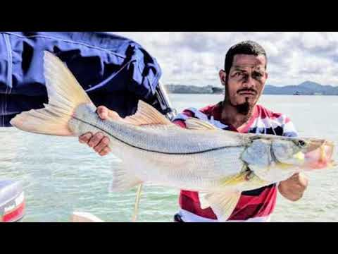 Fishing The Panama Canal, Gatun Lake, Peacock Bass & Snook