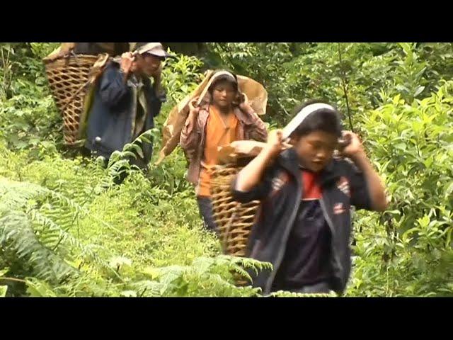 Les enfants bûcherons des montagnes chinoises