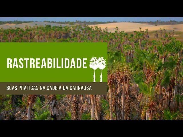Rastreabilidade - Boas Práticas na Cadeia Produtiva da Carnaúba