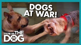 Family At War Over Which Dog Gets To Stay | It's Me or the Dog