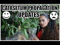 CATASETUM PROPAGATION UPDATE