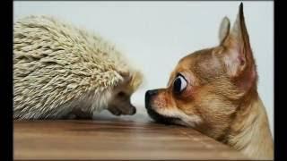 видео приколы с животными ржачные фото