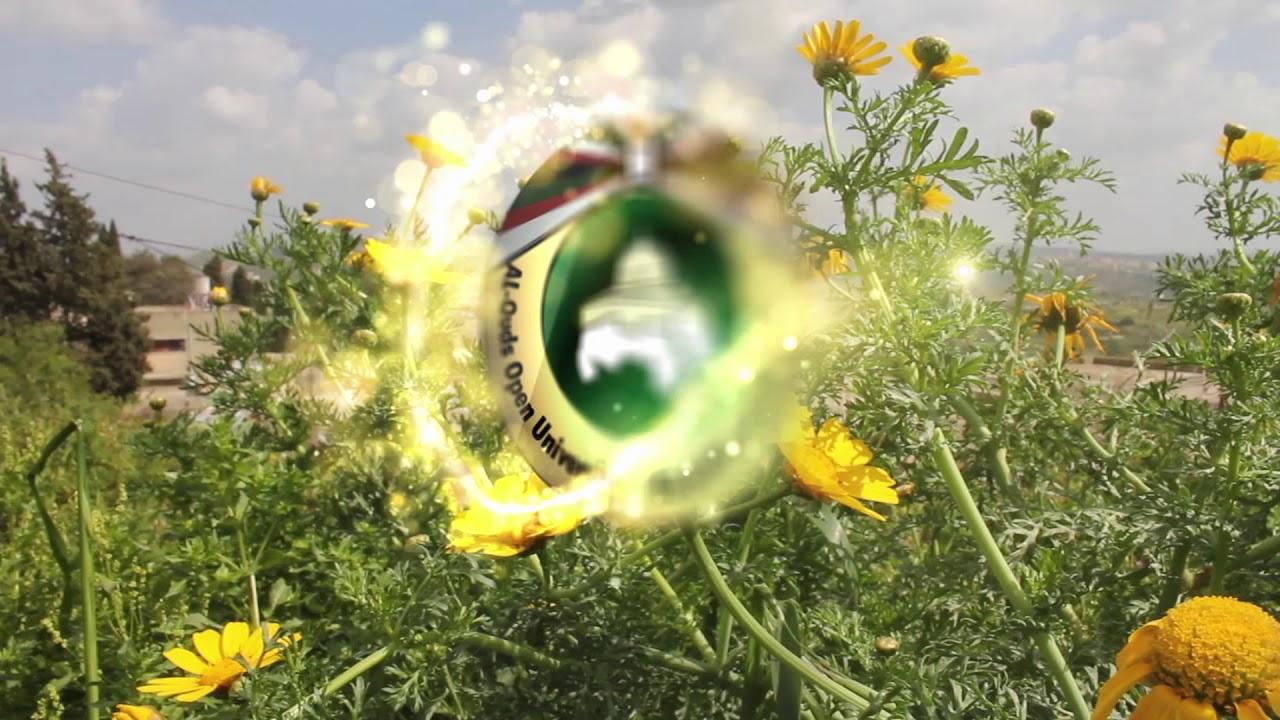 Yellow Flower Logo Youtube