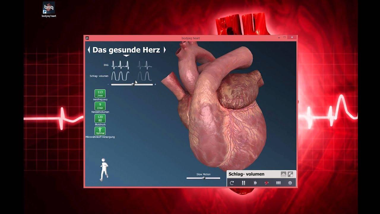 BodyXQ_Lernvideo 3_Die gesunde Herzfunktion - YouTube