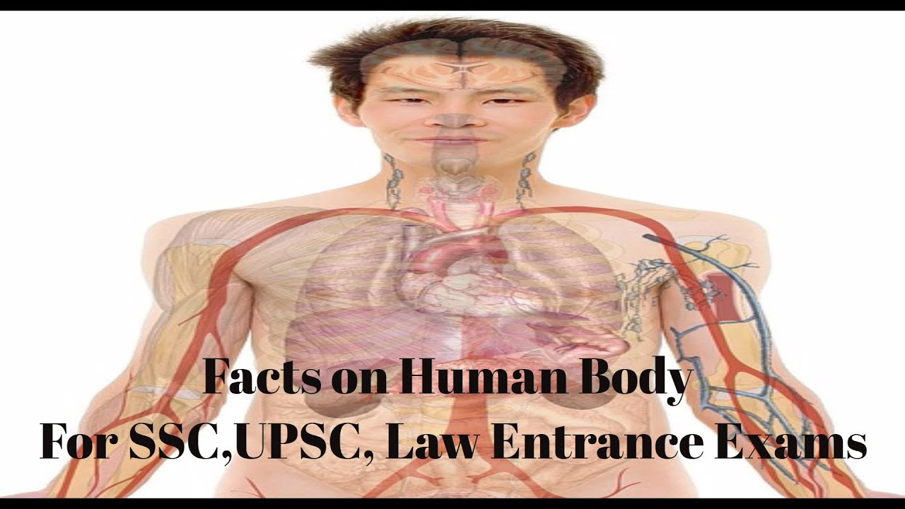 General Science For Competitive Exams Human Body Facts In Simple