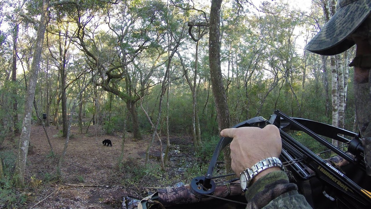 When Should I Plan an All Day Sit for Whitetails?