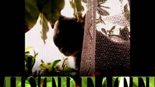 Кошка по имени Кошка