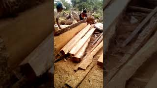 Making timbers using Husqvarna 372XP chainsaw