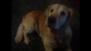 Analdrüsenentzündung beim Hund: Johannas Lösung