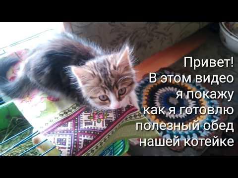 Вопрос: Как и чем накормить месячного котёнка?
