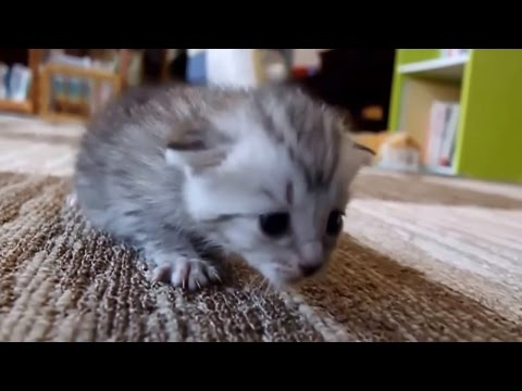Funny cats and cute kittens meowing and talking